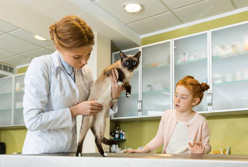 Doctor checking cat