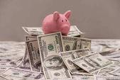 Dollar banknotes and piggy bank
