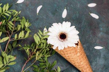 Chrysanthemum flower in waffle cone