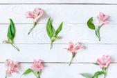 Fotografie Beautiful blooming flowers
