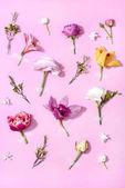 krásné kvetoucí květiny