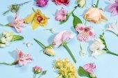 gyönyörű virágzó virágok