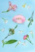 Fényképek szép virágzó virágok