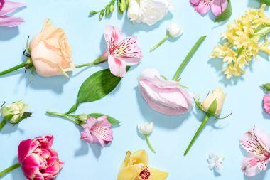 Beautiful blooming flowers