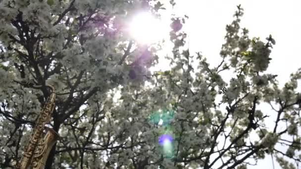 Arany alt szaxofon miniatűr lóg egy virágzó fa fehér virágok. A nap egy virágzó fa ágain keresztül ragyog. Romantikus tavaszi háttér. Lassított mozgású videó.