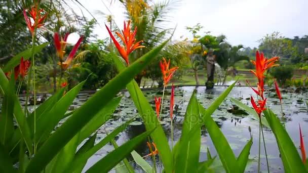 Červené květy na pozadí jezero s lekníny a fontána