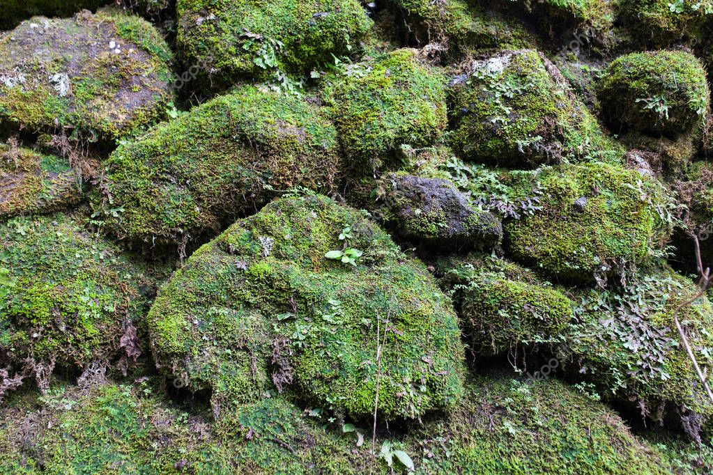 Old stone wall with leaves and moss