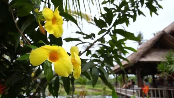 Gelbe tropische Blumen auf dem Baum — Stockvideo © shishkin137 ...