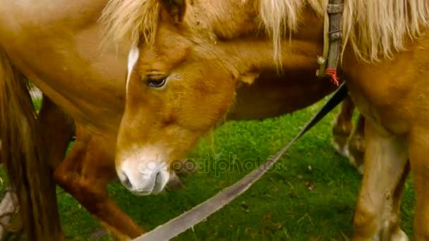 Ginger foal, colt, horse