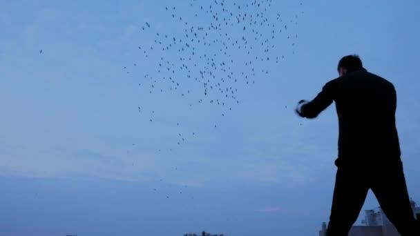 Boxen auf dem Dach mit fliegenden Vögel