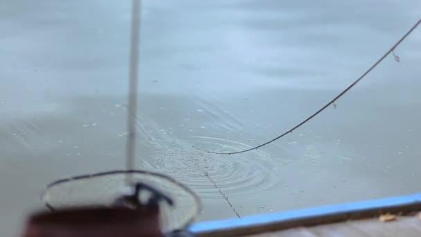 Akasztott hal. Szivárványos pisztráng terület halászati