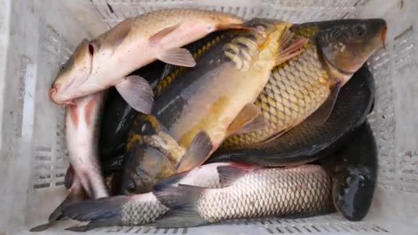 Ponty, hal hal mezőjében ugrás. Haltenyésztés