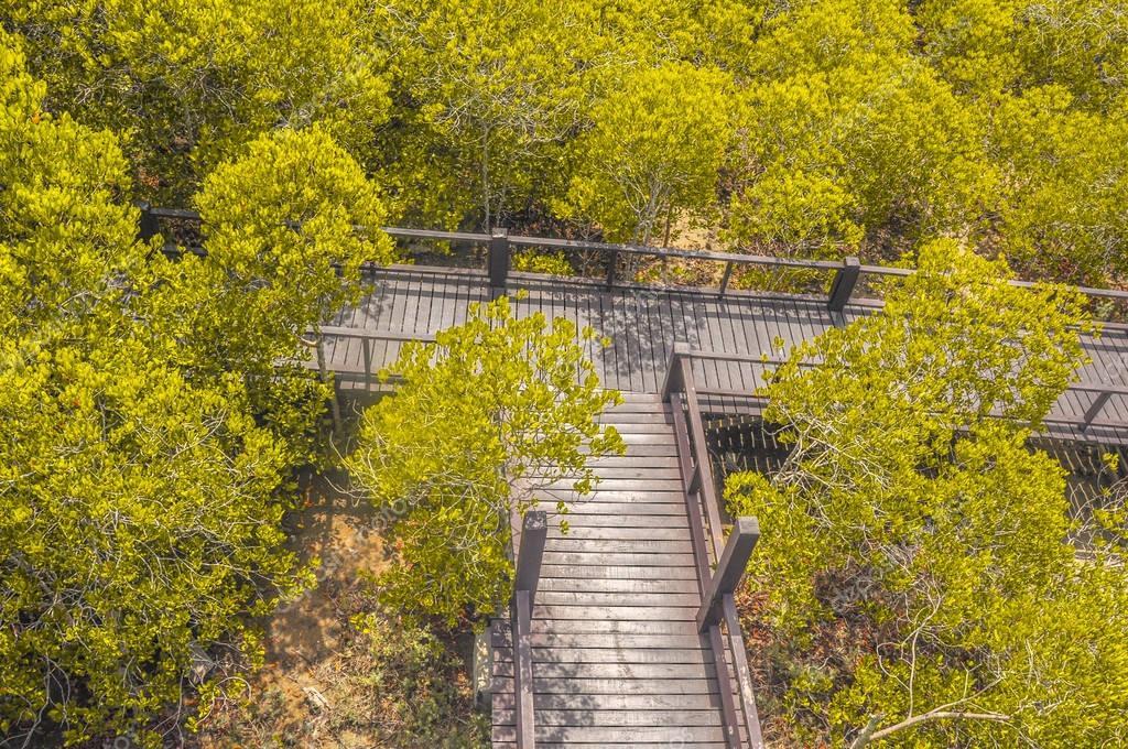 Walkway with wooden bridge through mangrove forrest