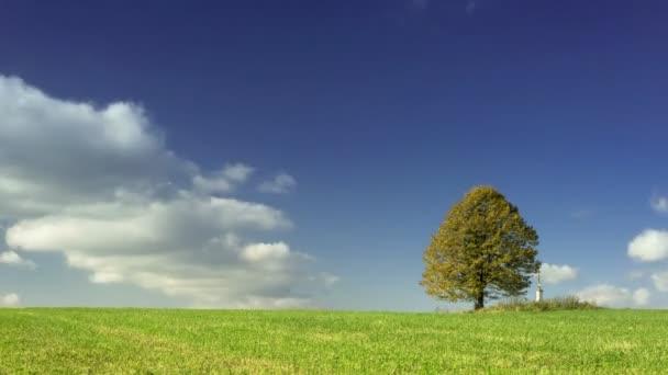 Zeitraffer-Aufnahme eines einsamen Baumes