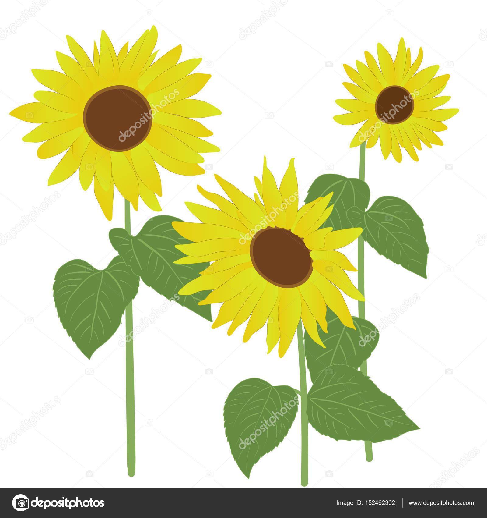 Sonnenblumen drei Blumen — Stockvektor © Baskiwi #152462302