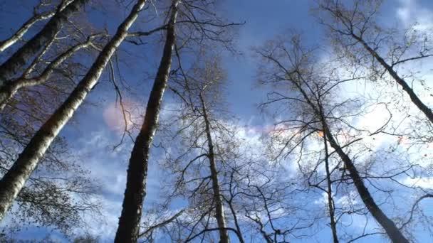 Kmeny stromů bez listí na slunci