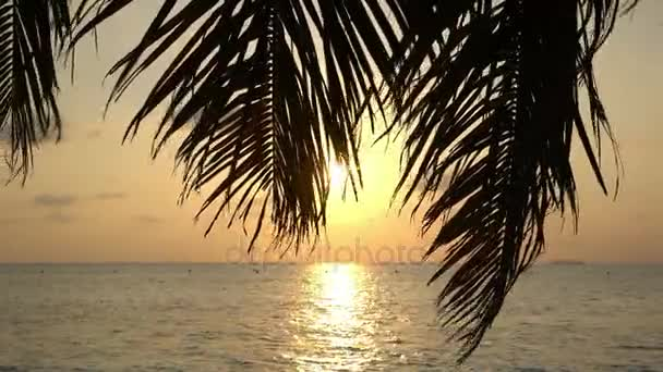 Tropical sunset with palm tree.