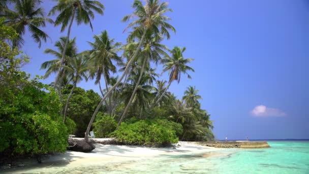 Tropická krajina s palmami a pláž