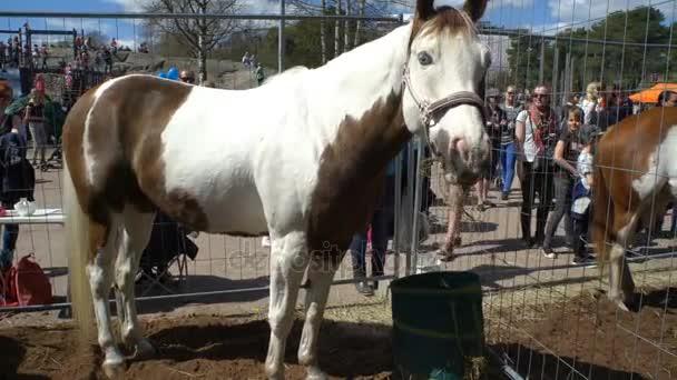 Děti a dospělí obdivovat plnokrevných koní během veřejné festival city koní v parku Kaivopuisto