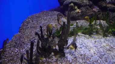 Aquarium with plants and tropical colorful fishes