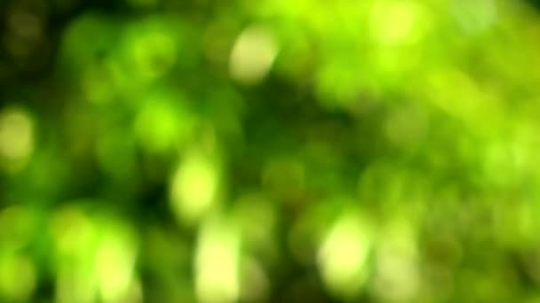 Natural abstract background. Defocused tree with green leaves moving in the wind, with light reflecting from water.