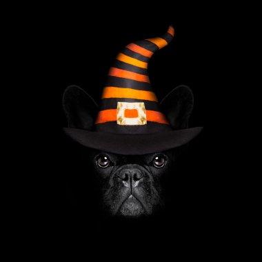 halloween dog on black backgroud