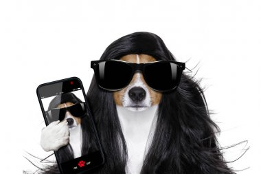 grooming dog at the hairdressers