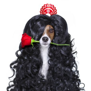 valentines in love spanish lola dog
