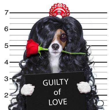 crazy in love valentines dog mugshot