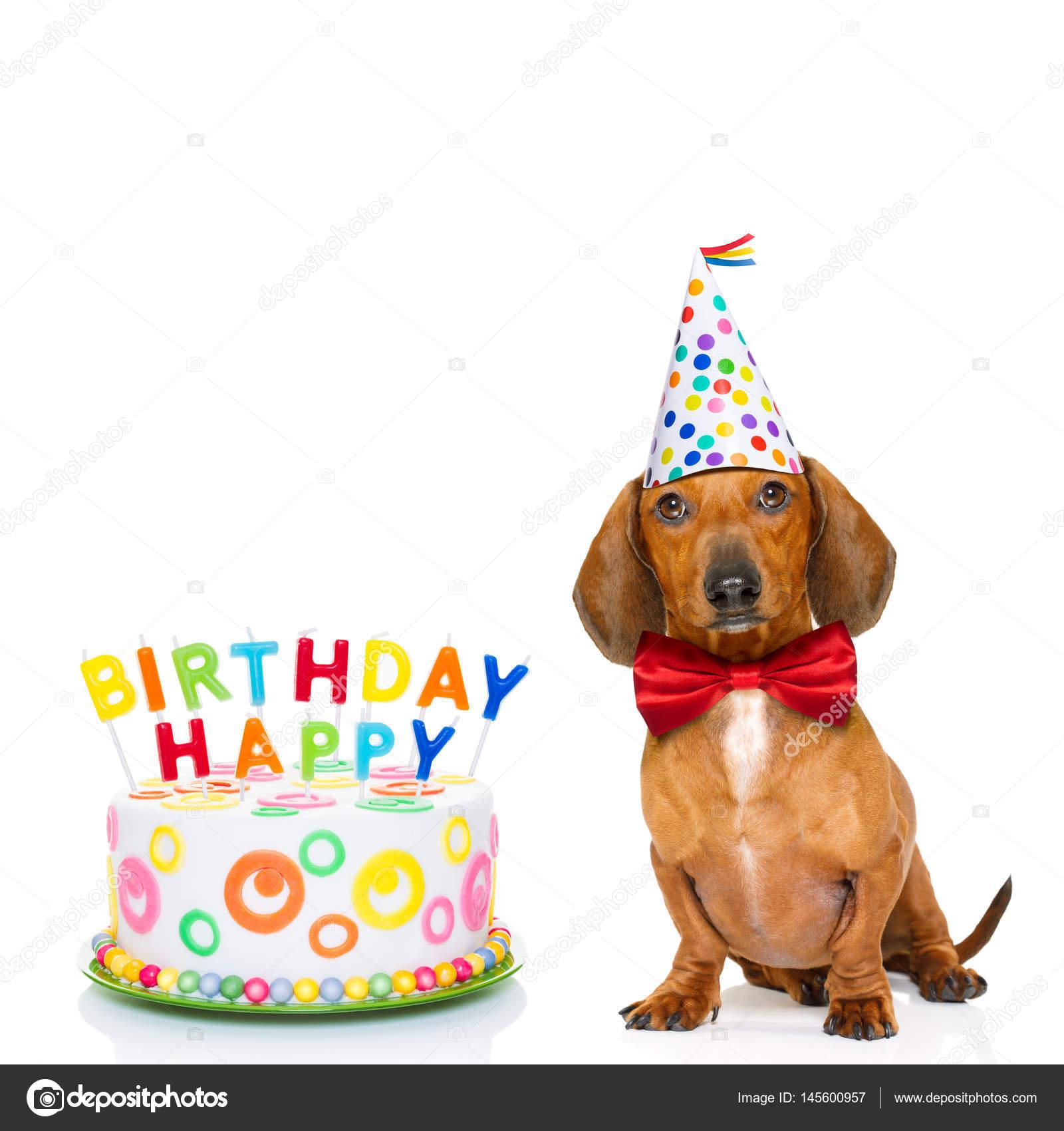 Cane Buon Compleanno Foto Stock Damedeeso 145600957