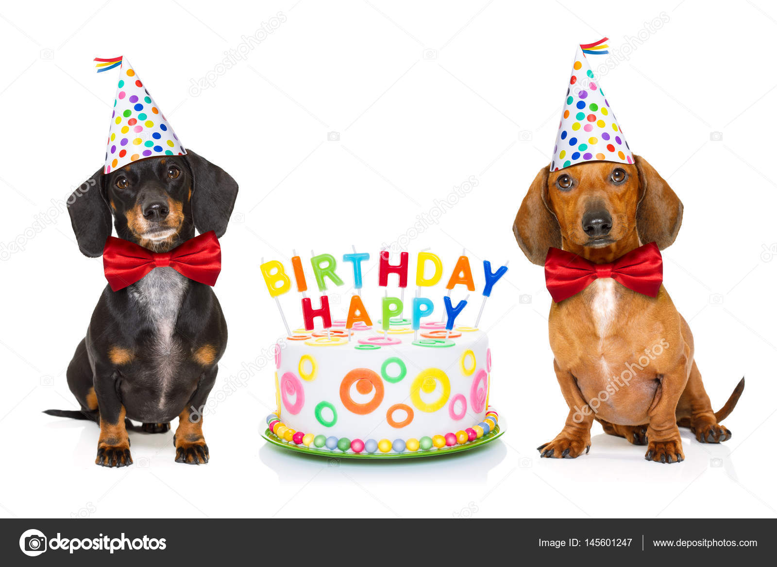 Couple Of Two Dachshund Or Sausage Dogs Hungry For A Happy Birthday Cake With Candles Wearing Red Tie And Party Hat Isolated On White Background Photo