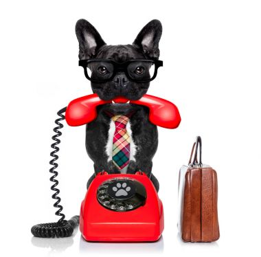French bulldog dog with glasses as secretary or operator with  old  dial telephone or retro classic phone, isolated on white background stock vector