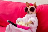kutya a kanapén tévénézés