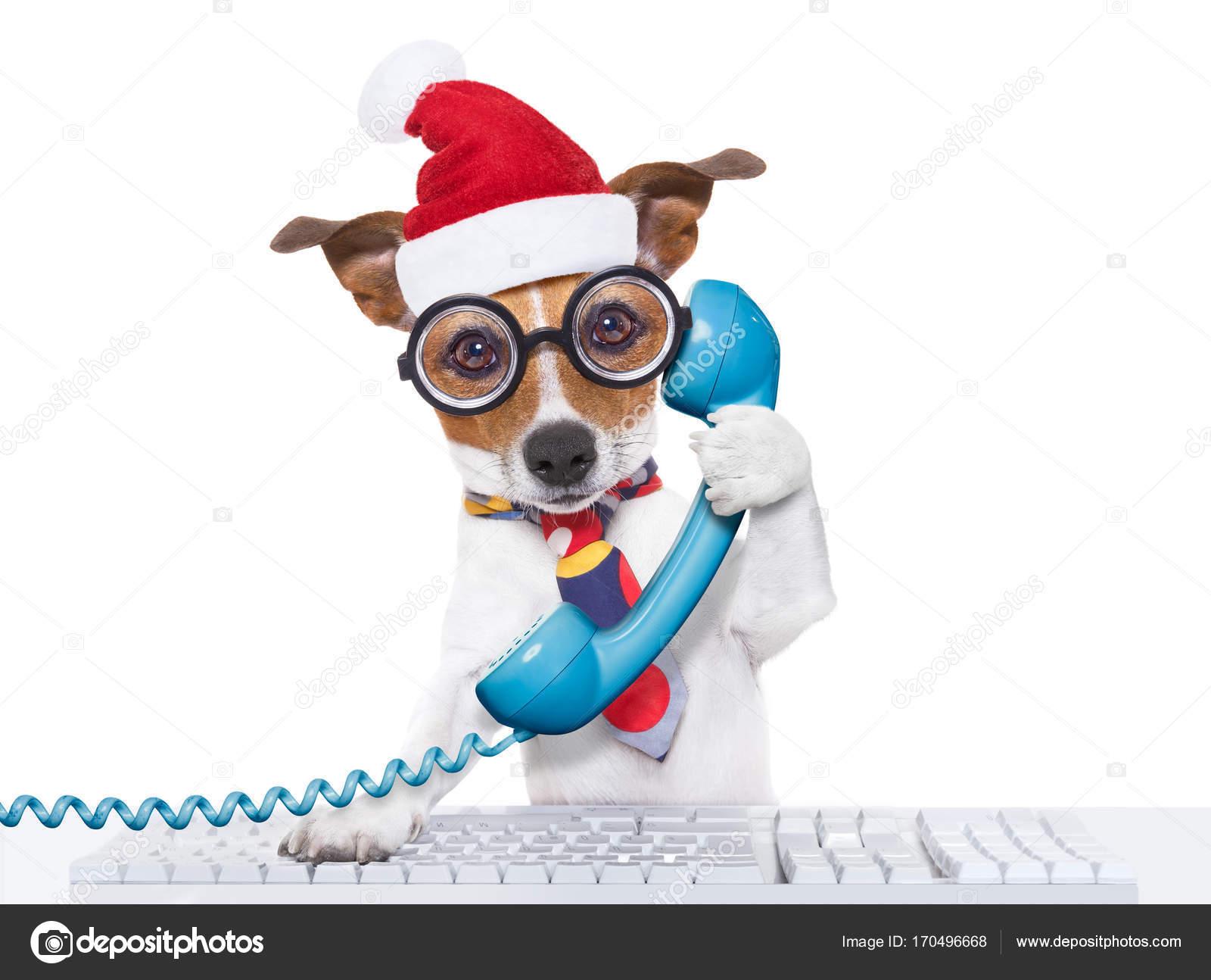 Employé de bureau de chiens sur les vacances de noël