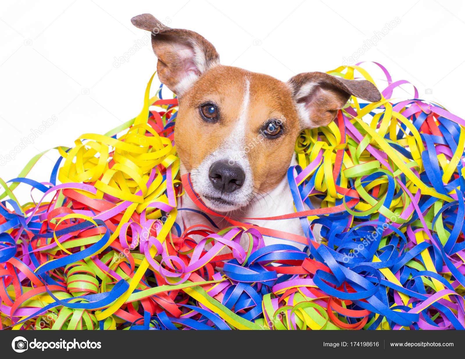 Alles Gute Zum Geburtstag Hund Stierkampfen Stockfoto C Damedeeso