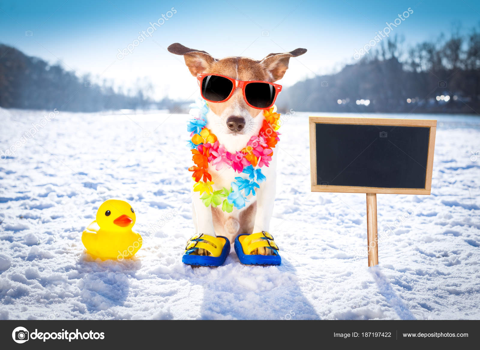 Cool Funny Freezing Icy Dog In Snow With Sunglasses And Flower Chain Waiting For The Summer To Come Very Soon Banner Side Photo By Damedeeso