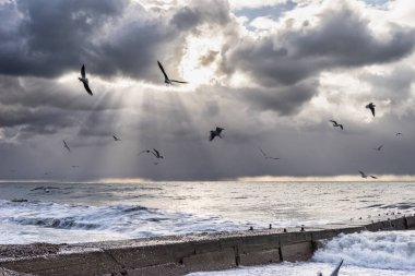in cloudy weather, the ocean rages, foaming waves, birds fly, the sky is cloudy