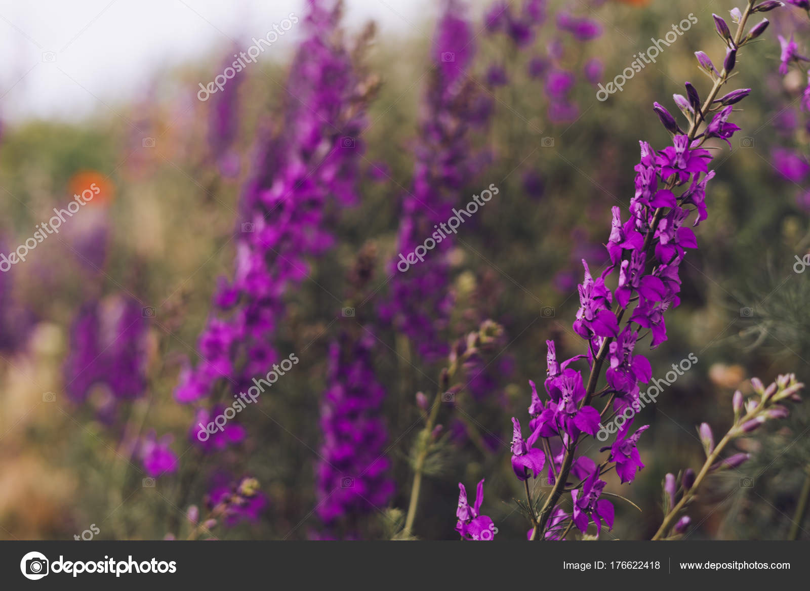 dans le jardin poussent de belles fleurs mauves odorantes ...