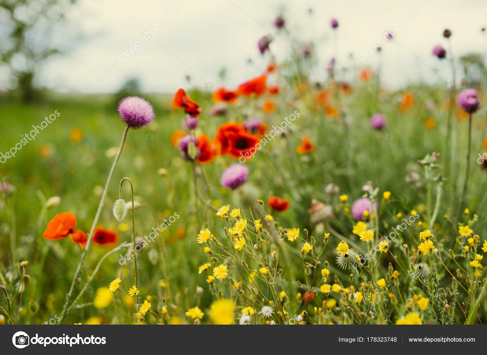 On The Endless Green Field Grow Fragrant Spring Yellow And Red