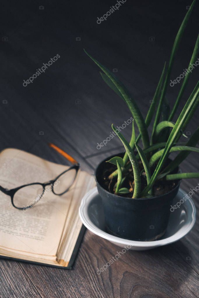 on a wooden floor there is a flower in a pot and a book