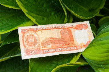Fifty Venezuelan bolivares bank note on the leaves