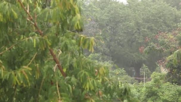 Regenwasser im Garten
