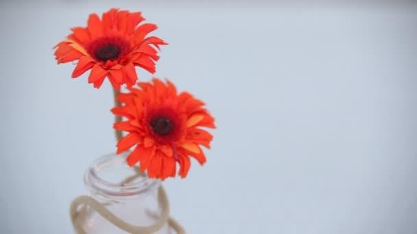 Beltéri növény dekoratív darab
