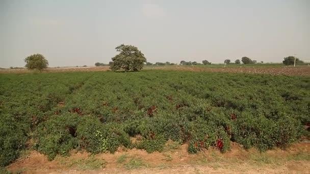 Červená zima v polích