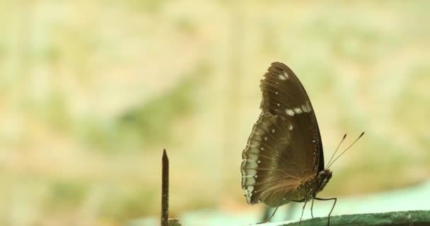 A pillangó közelsége