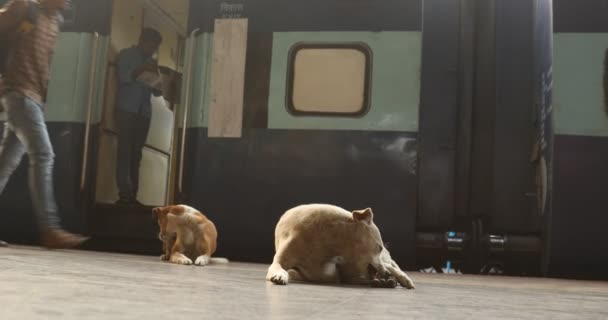 Dogs in a Train Station,Tamil Nadu,India