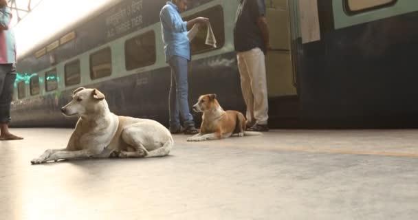 Kutyák-ban egy vasútállomás, Tamil Nadu, India