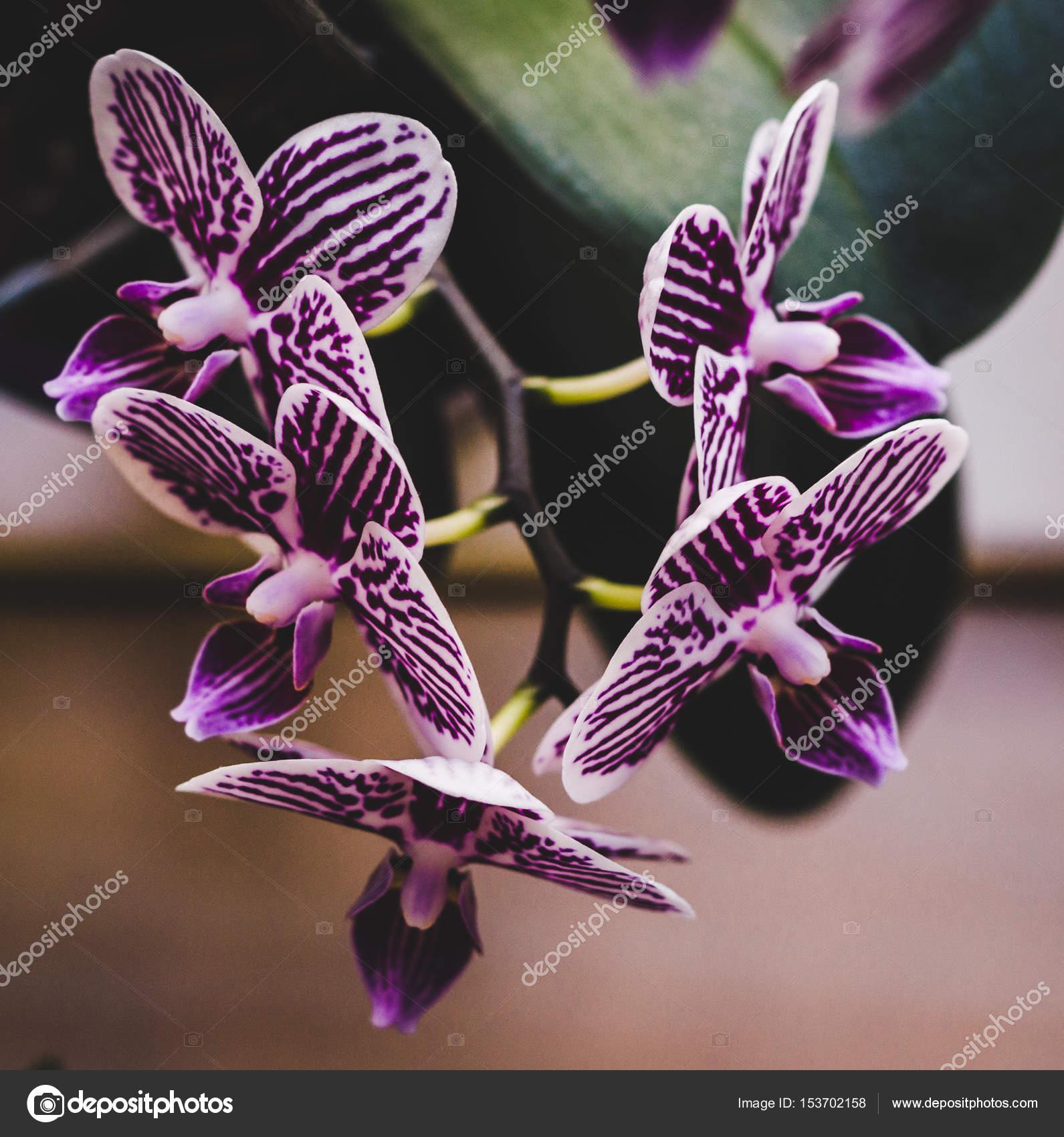 Flowering House Plants, Indoor Plants U2014 Stock Photo