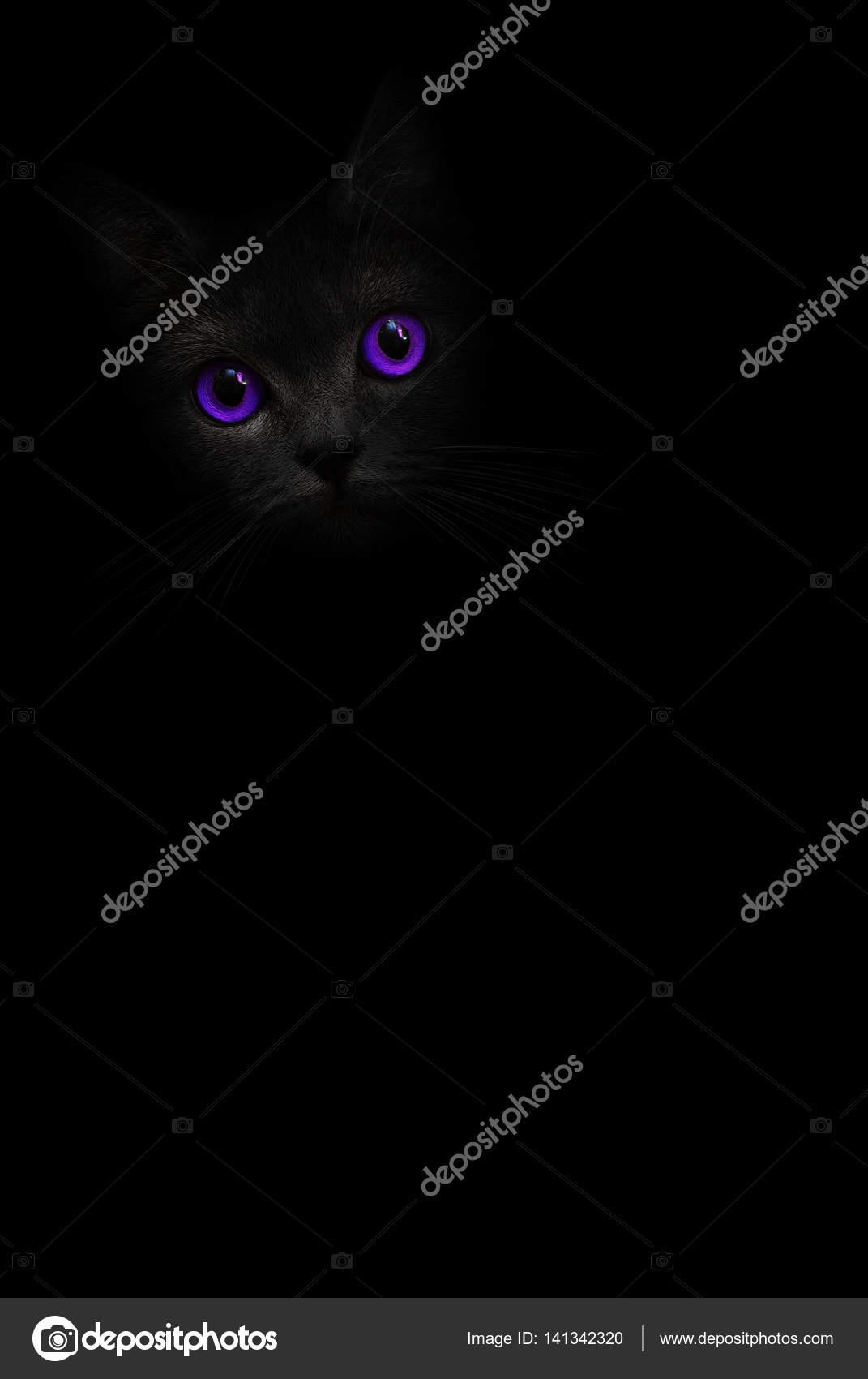63c5888204166 Gato preto com olhos violetas está olhando para fora da sombra sobre o  fundo preto.