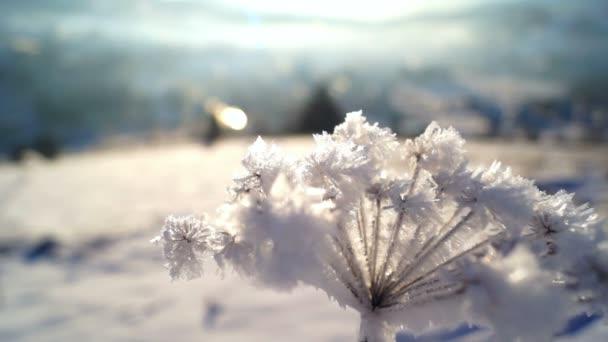 Zimní les slunce rostlin sněhu ledu
